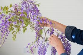 wisteria a field guide to planting care and design on gardenista