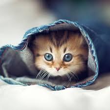 pictures of cats qygjxz