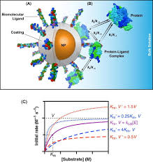 A Anatomy Understanding Enzymatic Acceleration At Nanoparticle Interfaces