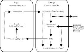 ammonium excretion by a symbiotic sponge supplies the nitrogen