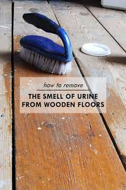 How To Pull Up Carpet From Hardwood Floors - 15 best removing urine smell images on pinterest urine stains
