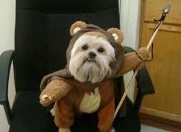 Ewok Halloween Costume 8 Adorable Star Wars Dog Costumes