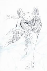 great horned owl sketch by heliocyan on deviantart