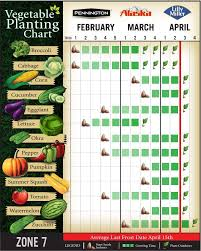 vegetable planting chart for zone 7 here is what my planting