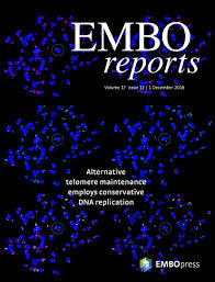 piecing together a different picture embo reports
