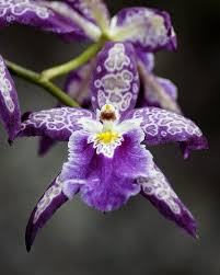 purple orchids 44 best orchids images on orchid flowers flowers and