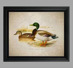 vintage duck illustration mallard duck art wild duck
