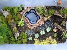 turtle envy melanie u0027s miniature garden turtle minis and box