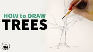 how to sketch u0026 draw trees understanding the fundamentals youtube