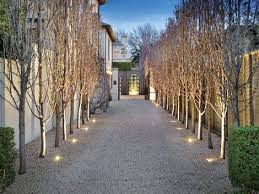 trees for drive ways avenues and paths pyrus capital pear