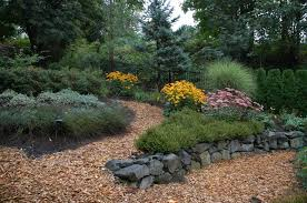 low maintenance yard plants on prepossessing landscaping ideas for