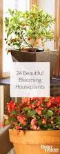 plant five easy to care for houseplants beautiful house plants