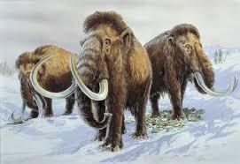 sudden heat spikes ice age u0027s mammoth mammals ice age