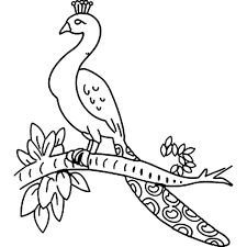 peacock drawing for children coloring pages peacock 4851 kids