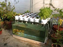backyard aquaponics the term u201cbackyard aquaponics u201d describes a