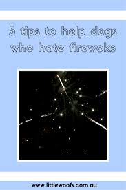 best 25 dog scared of fireworks ideas on pinterest dogs and