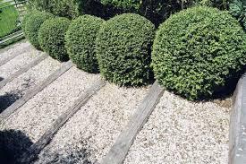 hedges landscape design garden care services and gardening