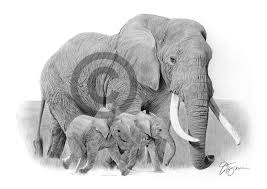 pencil sketch of baby elephant pencil drawing of an elephant with