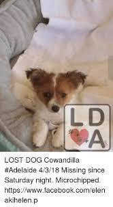 Saturday Memes 18 - lost dog cowandilla adelaide 4318 missing since saturday night
