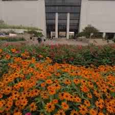 rising star international affairs texas state university