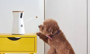 the furbo dog camera is a must have for the good pup in your life