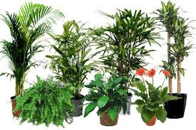 nasa air purifying plants air purifiers