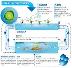 aquaponics system the benefits of aquaponics include
