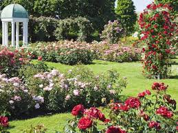 English Cottage Gardens Photos - how to grow a cottage garden woman u0027s weekly