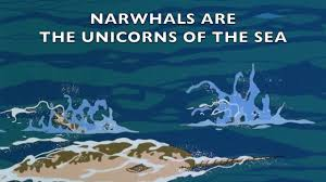 the last narwhal unicorn of the sea on vimeo