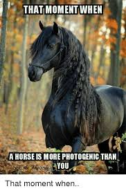 Horse Birthday Meme - 25 best memes about birthday memes birthday memes