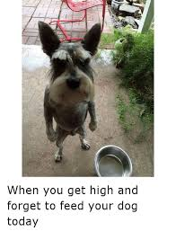 High Dog Meme - 繖ゥ when you get high and forget to feed your dog today dogs