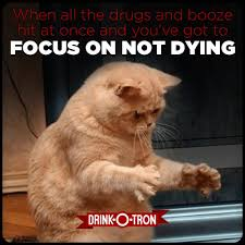 Drunk Cat Meme - drink o tron drunk meme drunk memes pinterest drunk memes