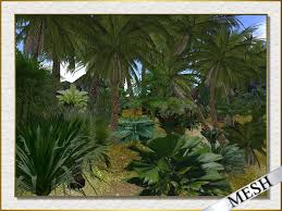 second marketplace stock clearance sale tropical plants