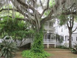 charleston single house 71st festival of house u0026 gardens tour serendipity traveler