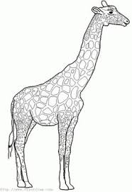 simple giraffe outline paint picture giraffe