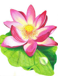 lotus flower pencil drawing colour pencil sketches flowers google