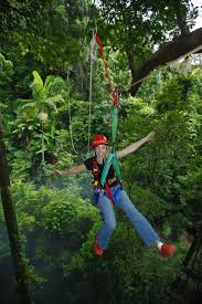 Treetop Canopy Tours by 18 Best Australian Zip Lines U0026 Canopy Tours Images On Pinterest
