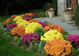 pictures flowers for the front yard free home designs photos