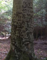 initials carved in tree tree vandalism often damages tree bark tree damage from vandals