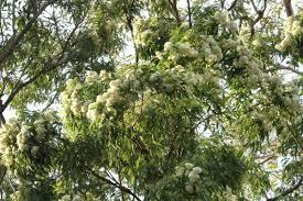 summer snaps of nature in my backyard u2013 my wild australia
