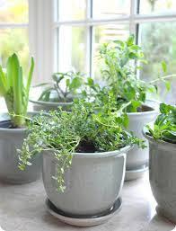 indoor herb gardens the home herb garden