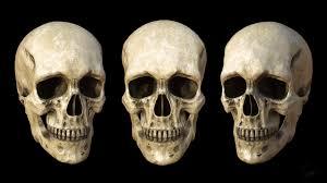 Human Anatomy Skull Bones Anatomy Organ Pictures Skull Human Anatomy Top Collection