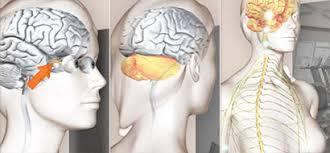muskelschwäche ms verstehen symptome sklerose ms verstehen amsel e v