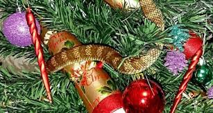 Decoration For Christmas Tree by Deadly Snake Hides In Christmas Tree Just Like A Decoration Huffpost