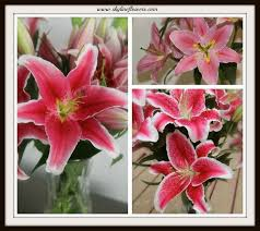 Dragon Lily Flower - 13 best images about things that make me happy on pinterest