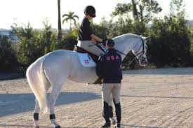 you can master sitting trot u2014really expert how to for english riders