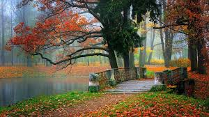 autumn hd landscape wallpapers beauty tree bridge tablet