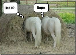 Soon Horse Meme - amazing soon horse meme funny horses on tumblr kayak wallpaper
