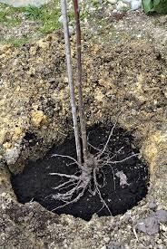 Achat Rosier Grimpant by Top 25 Best Planter Un Rosier Ideas On Pinterest Plantation