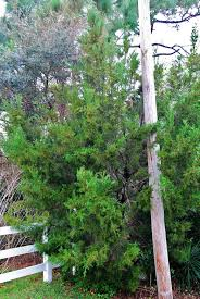 Florida Native Plants Pictures Landscaping With Florida Native Plants Blog Archive Southern Red